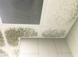 Mold Removal | ICC Restoration & Cleaning Services